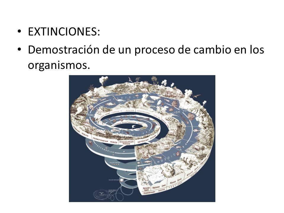 EXTINCIONES: Demostración de un proceso de cambio en los organismos.