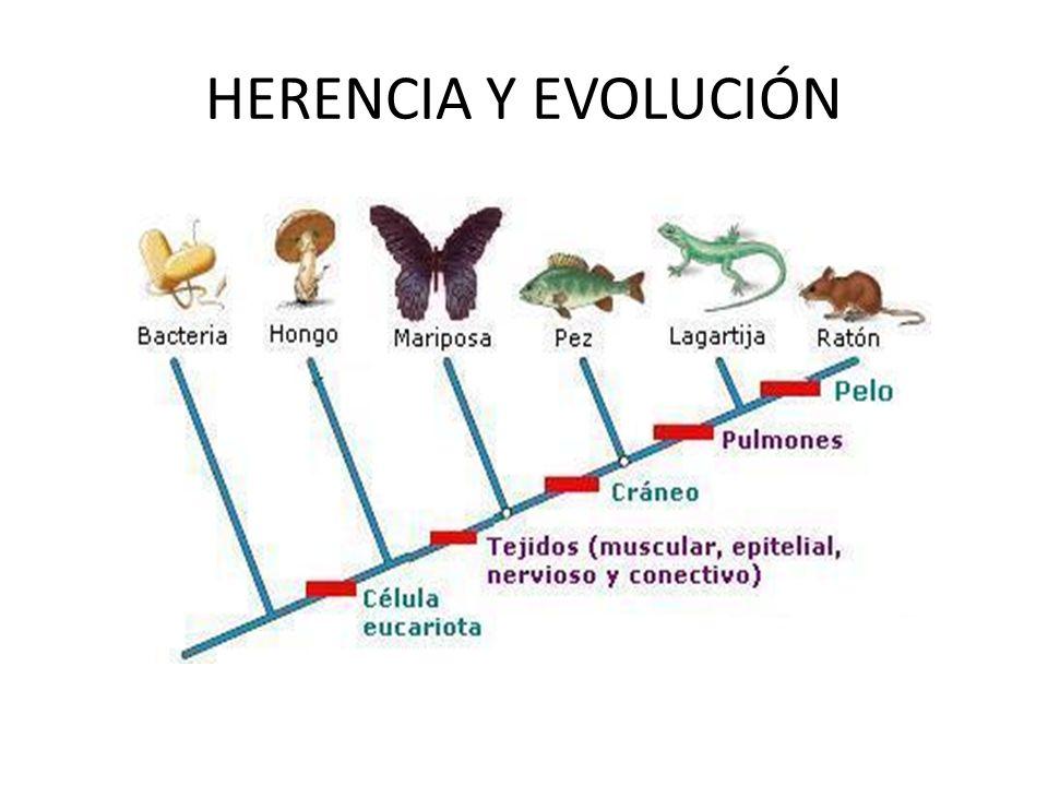 HERENCIA Y EVOLUCIÓN