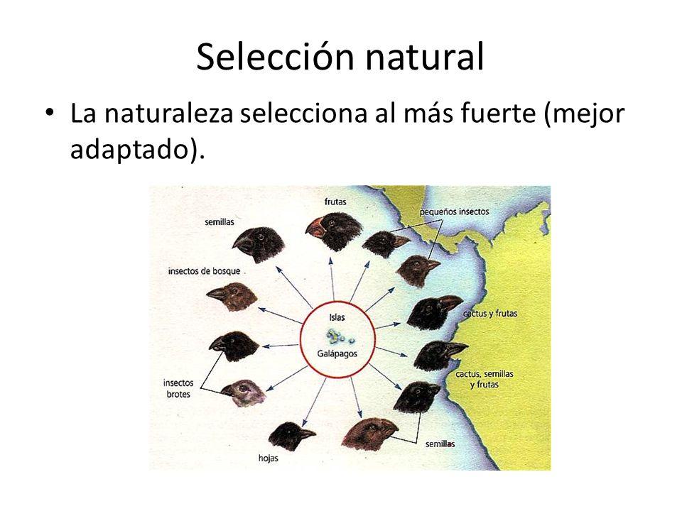 Selección natural La naturaleza selecciona al más fuerte (mejor adaptado).
