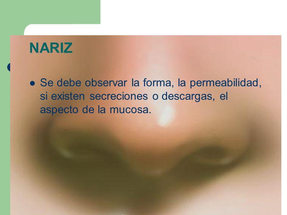 NARIZSe debe observar la forma, la permeabilidad, si existen secreciones o descargas, el aspecto de la mucosa.