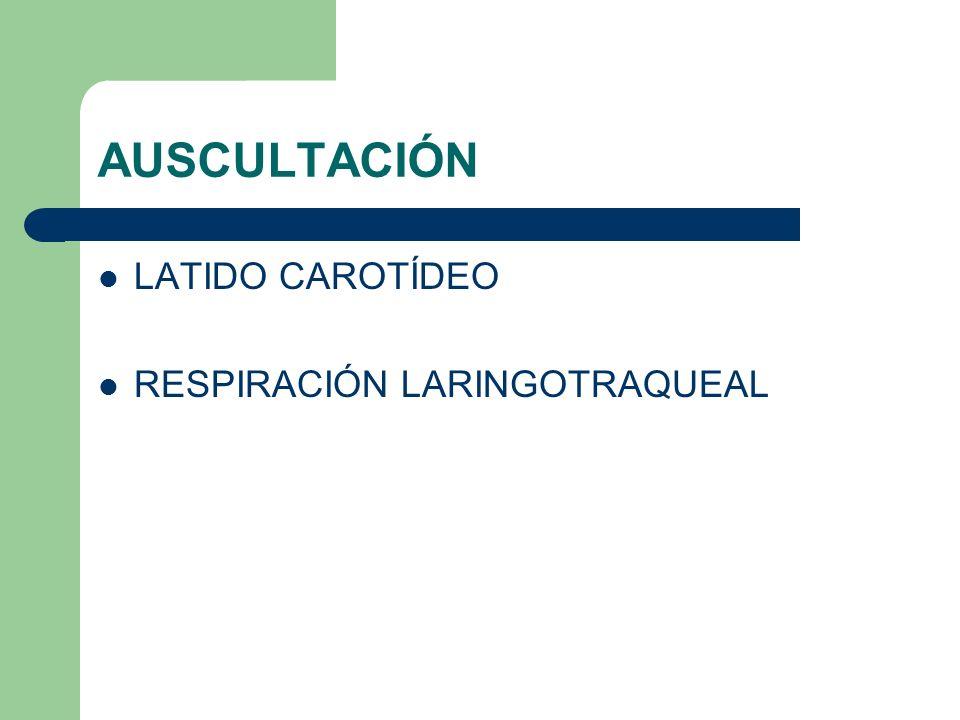 AUSCULTACIÓN LATIDO CAROTÍDEO RESPIRACIÓN LARINGOTRAQUEAL