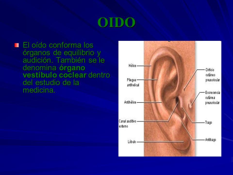 OIDO El oído conforma los órganos de equilibrio y audición.