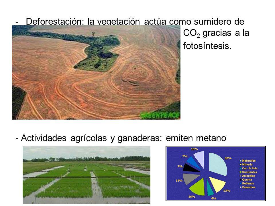 Deforestación: la vegetación actúa como sumidero de CO2 gracias a la