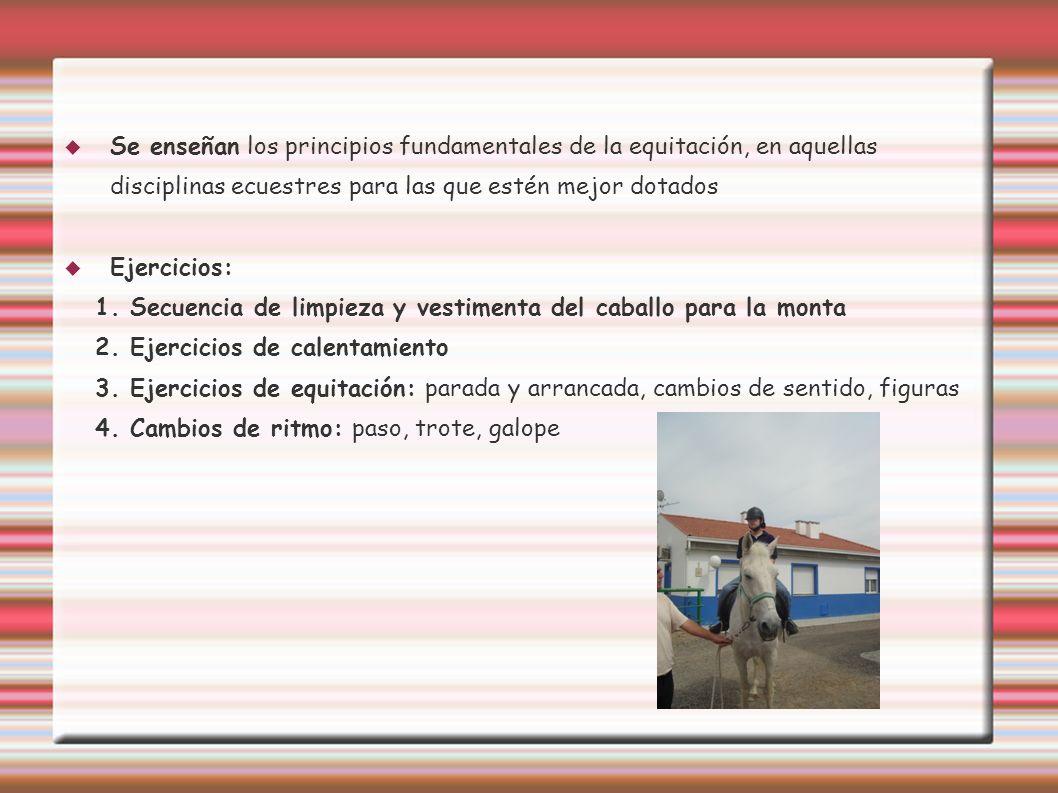 Se enseñan los principios fundamentales de la equitación, en aquellas disciplinas ecuestres para las que estén mejor dotados