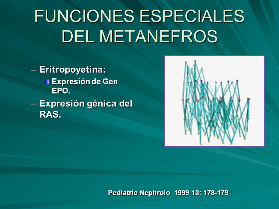 FUNCIONES ESPECIALES DEL METANEFROS
