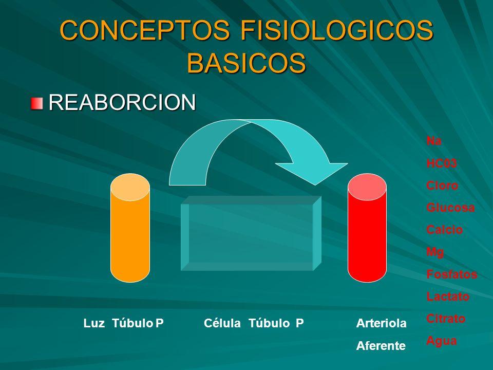 CONCEPTOS FISIOLOGICOS BASICOS
