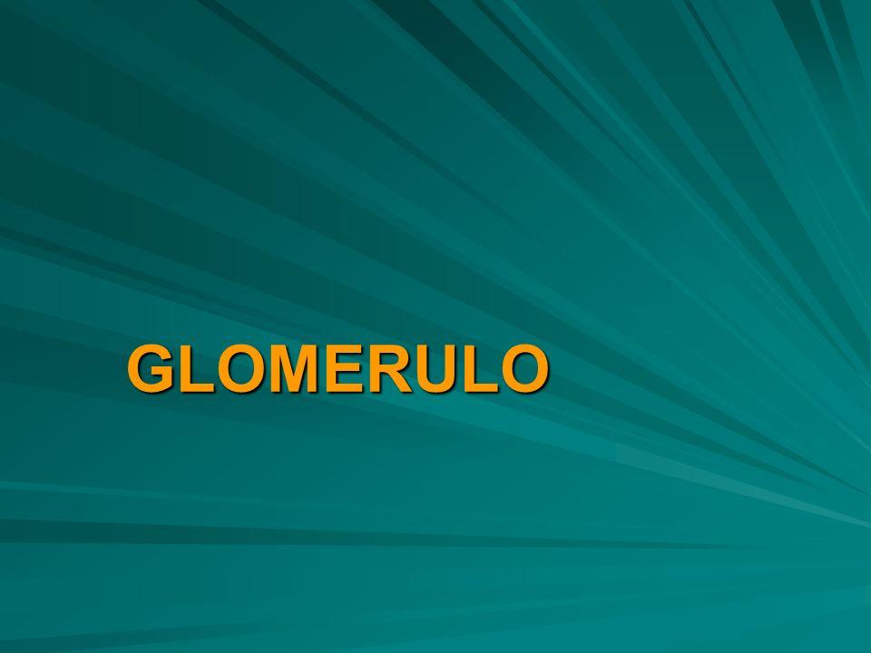 GLOMERULO