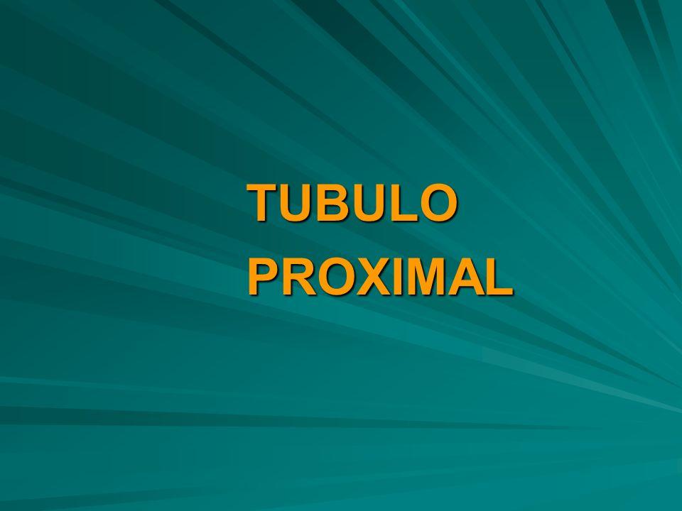 TUBULO PROXIMAL