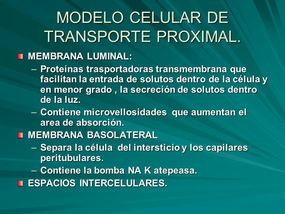 MODELO CELULAR DE TRANSPORTE PROXIMAL.