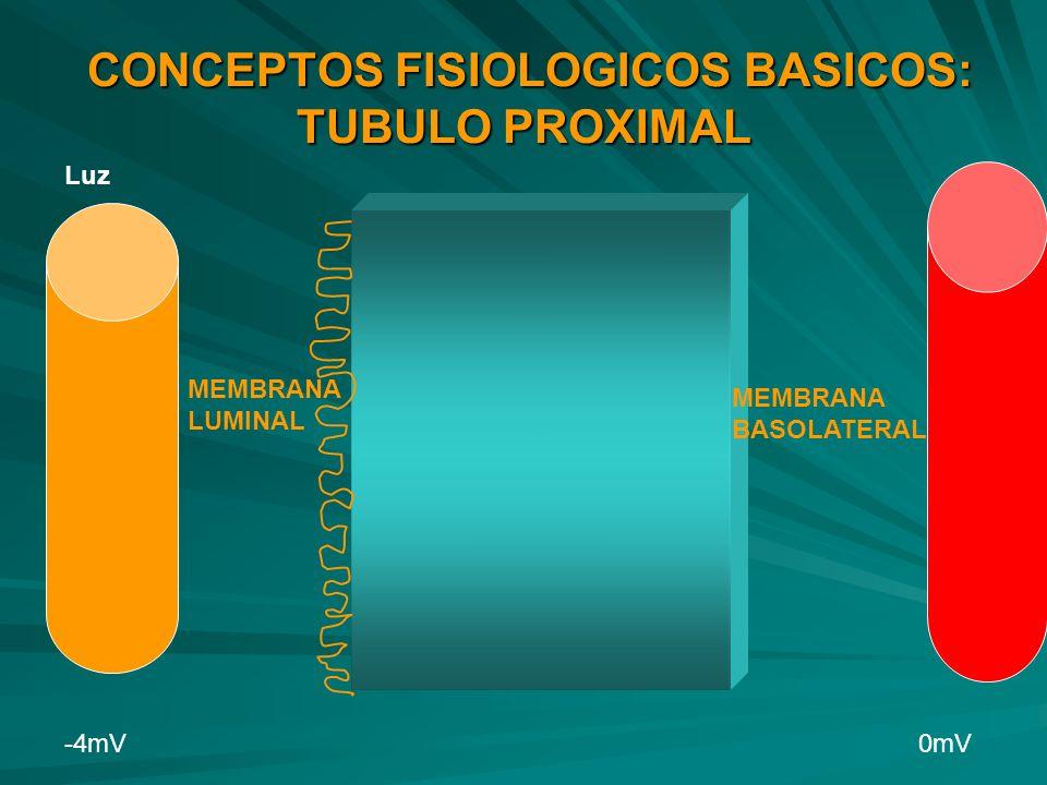 CONCEPTOS FISIOLOGICOS BASICOS: TUBULO PROXIMAL