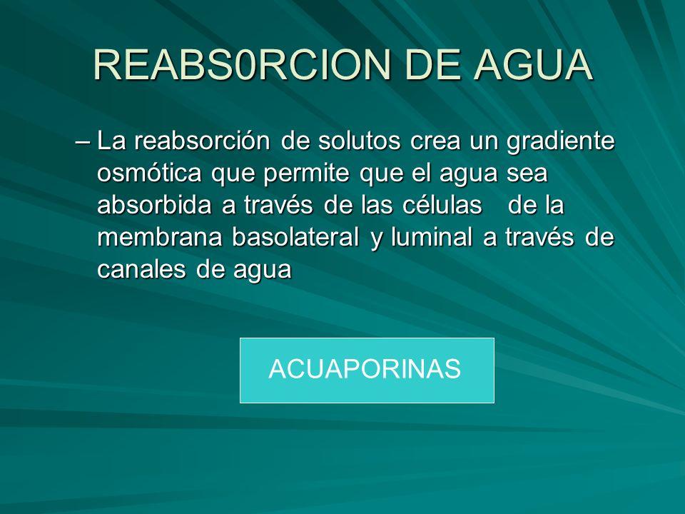 REABS0RCION DE AGUA