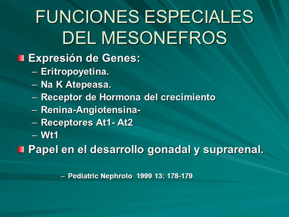 FUNCIONES ESPECIALES DEL MESONEFROS