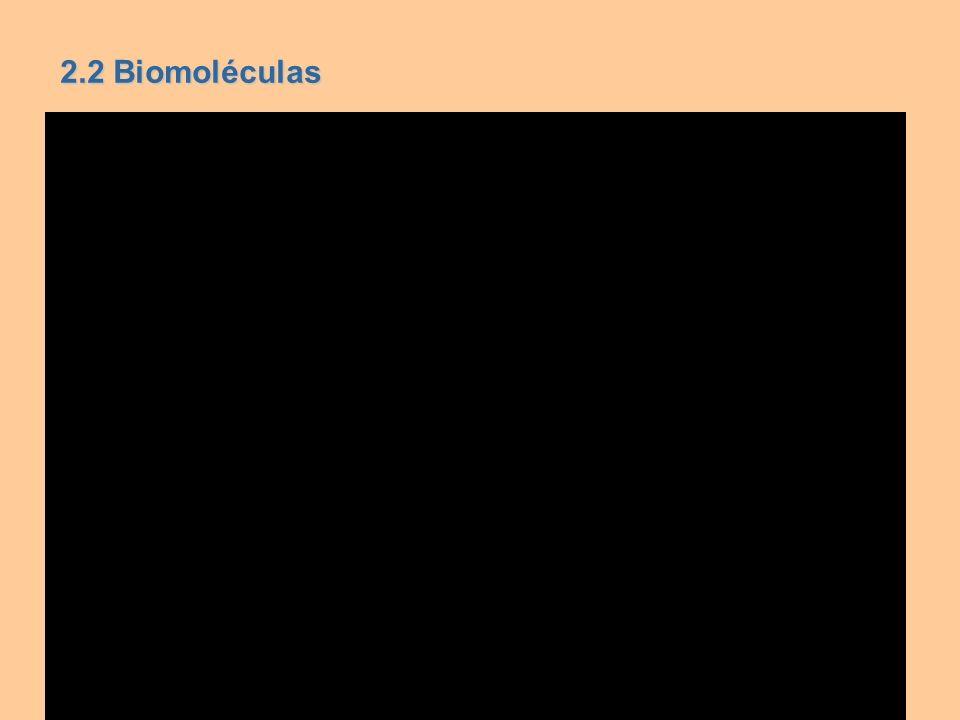 2.2 Biomoléculas
