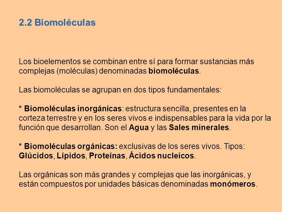 2.2 Biomoléculas Los bioelementos se combinan entre sí para formar sustancias más complejas (moléculas) denominadas biomoléculas.