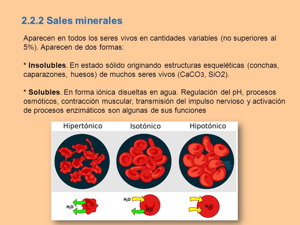 2.2.2 Sales minerales