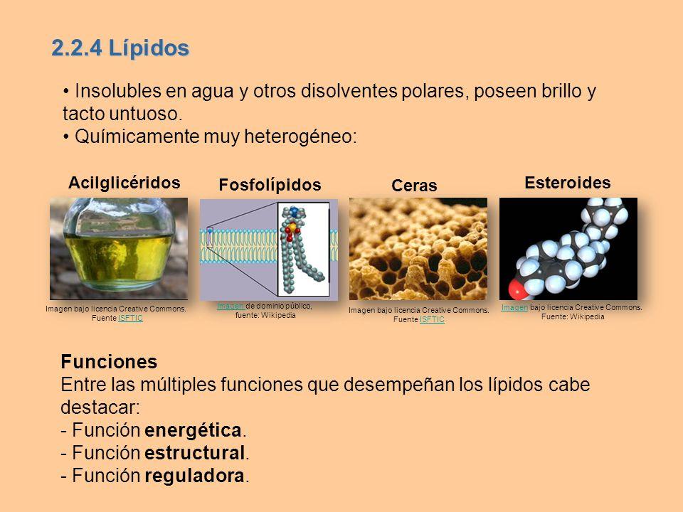 2.2.4 Lípidos• Insolubles en agua y otros disolventes polares, poseen brillo y tacto untuoso. • Químicamente muy heterogéneo: