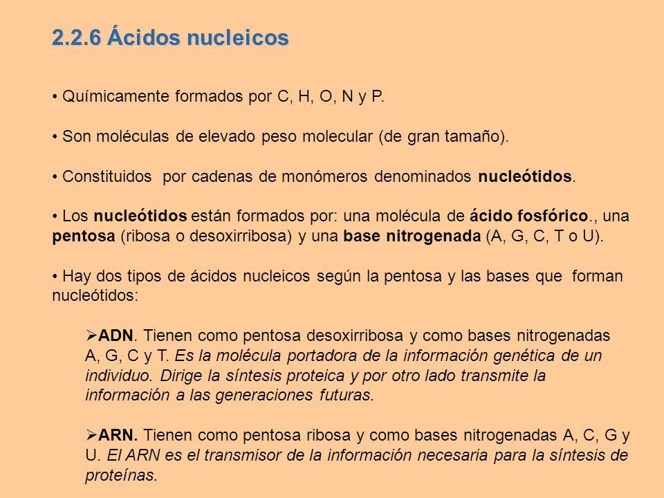 2.2.6 Ácidos nucleicos • Químicamente formados por C, H, O, N y P.