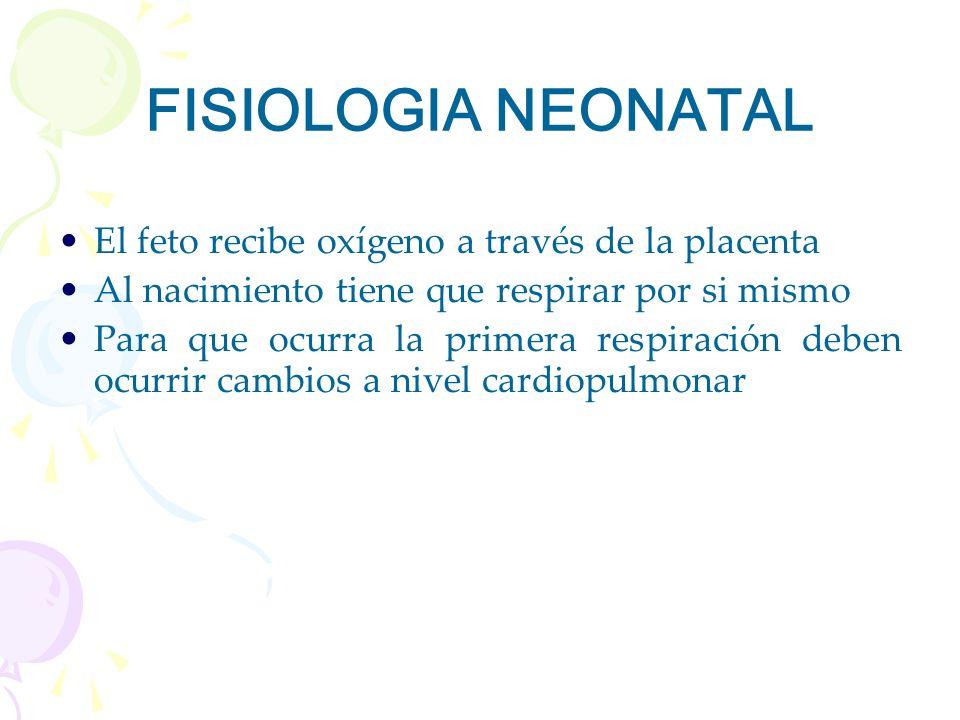 FISIOLOGIA NEONATAL El feto recibe oxígeno a través de la placenta