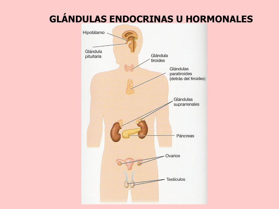 Hermosa Glándulas Endócrinas Cresta - Anatomía de Las Imágenesdel ...