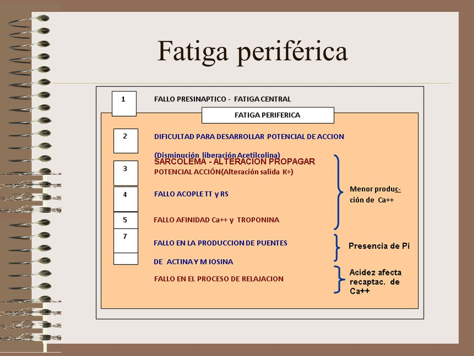 Fatiga periférica
