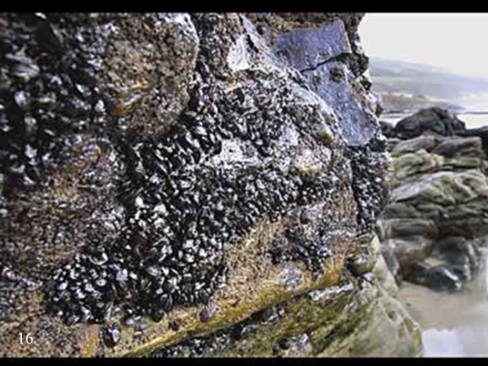 Here are mussels covered by a dirty black substance. What's that