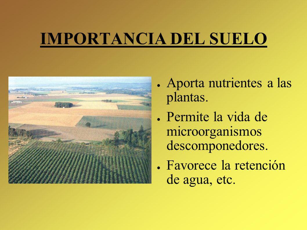 Qu es el suelo ppt video online descargar for Importancia de los suelos