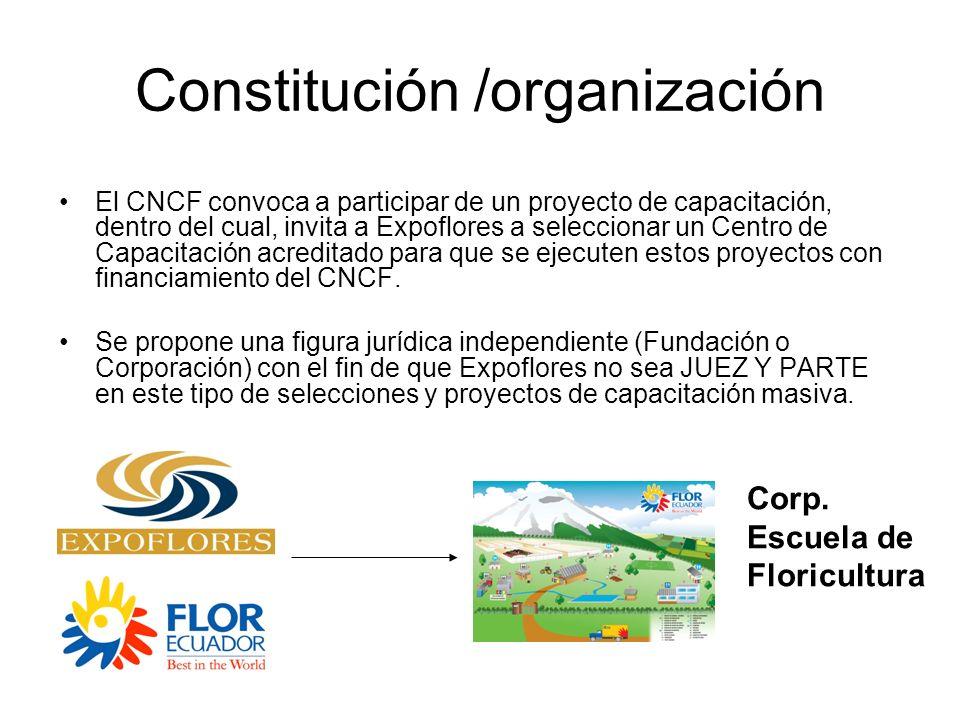 Constitución /organización