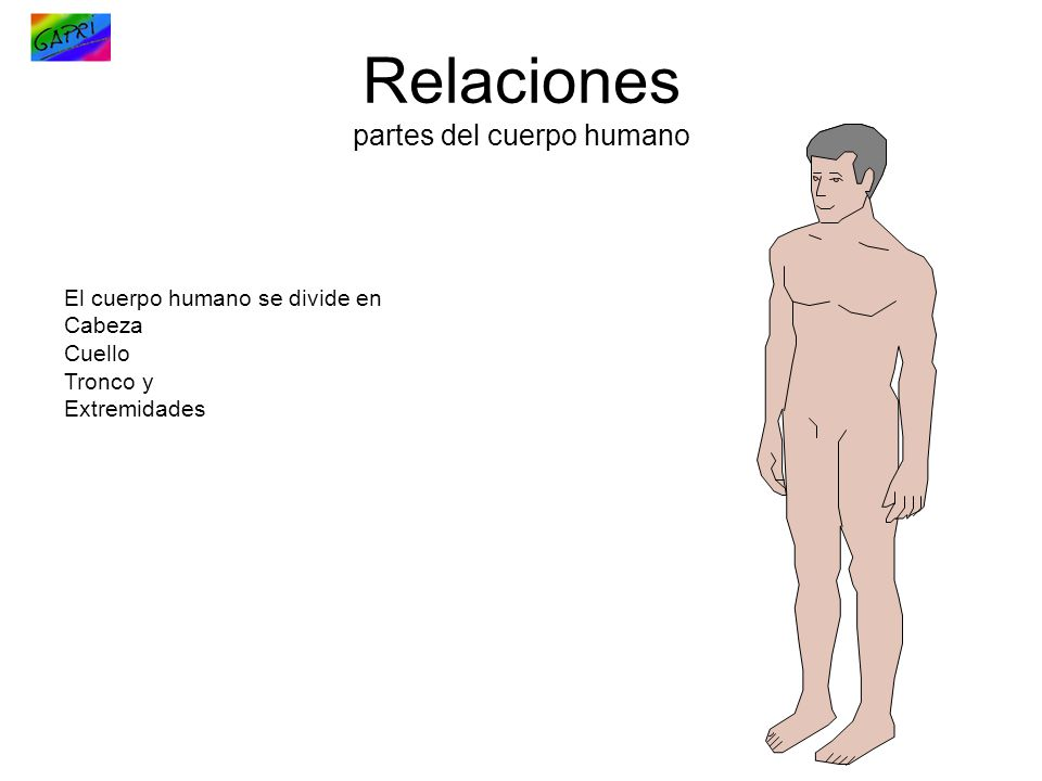 Relaciones partes del cuerpo humano