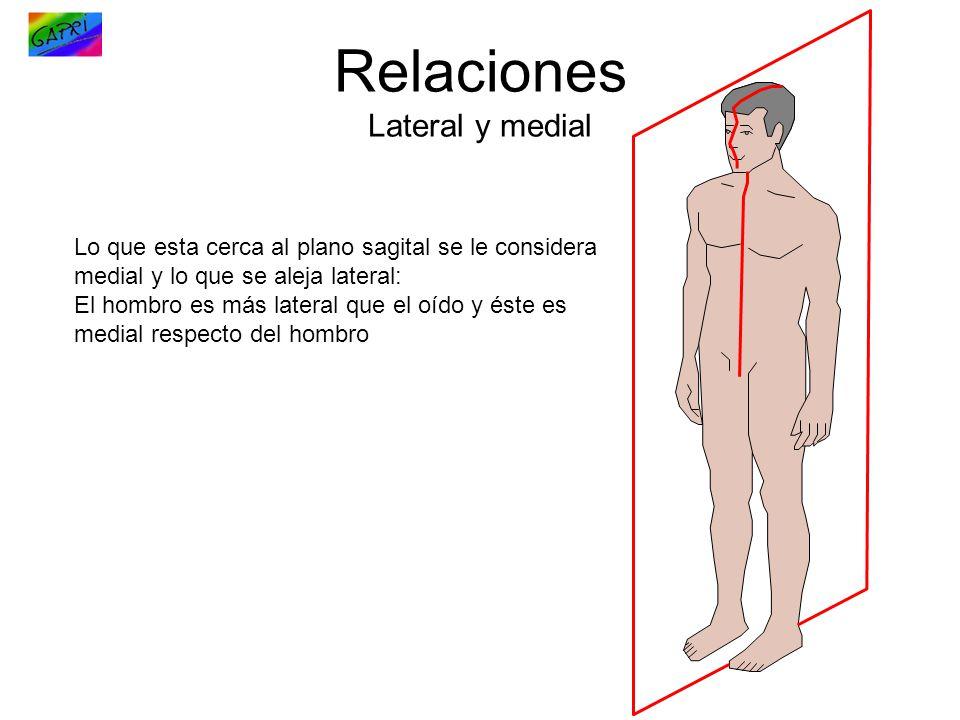 Relaciones Lateral y medial