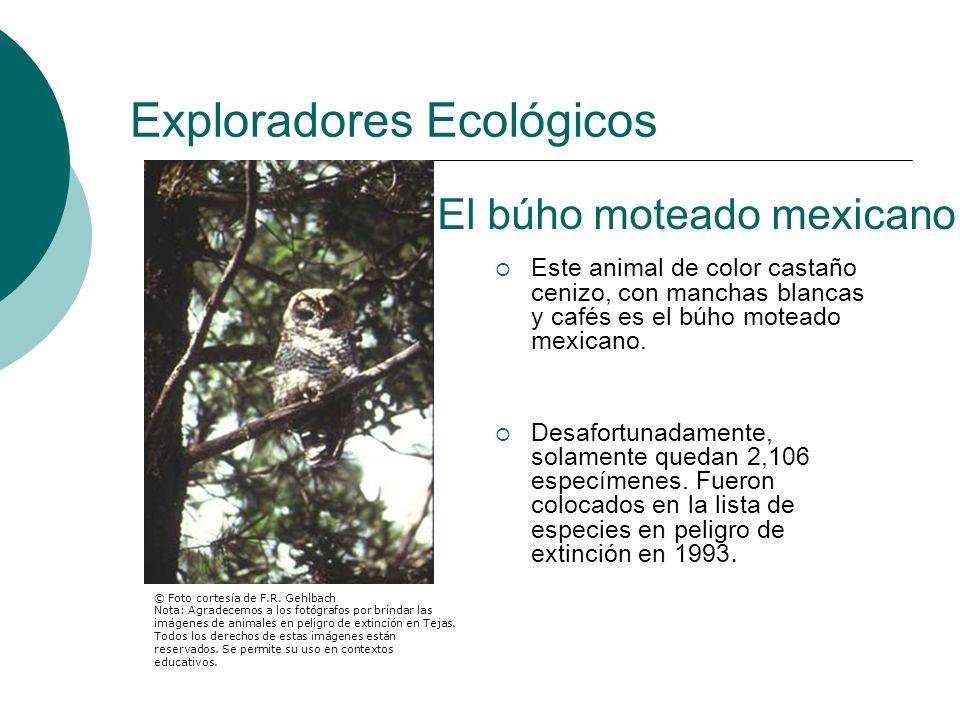 Exploradores Ecológicos