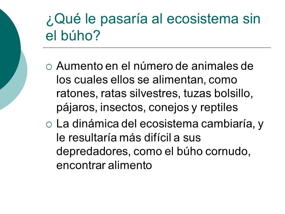 ¿Qué le pasaría al ecosistema sin el búho