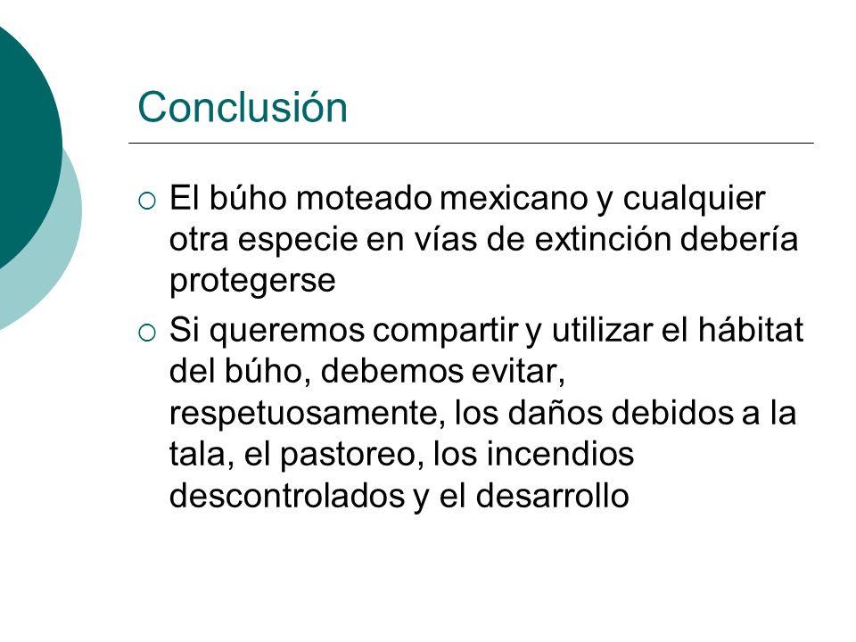 ConclusiónEl búho moteado mexicano y cualquier otra especie en vías de extinción debería protegerse.