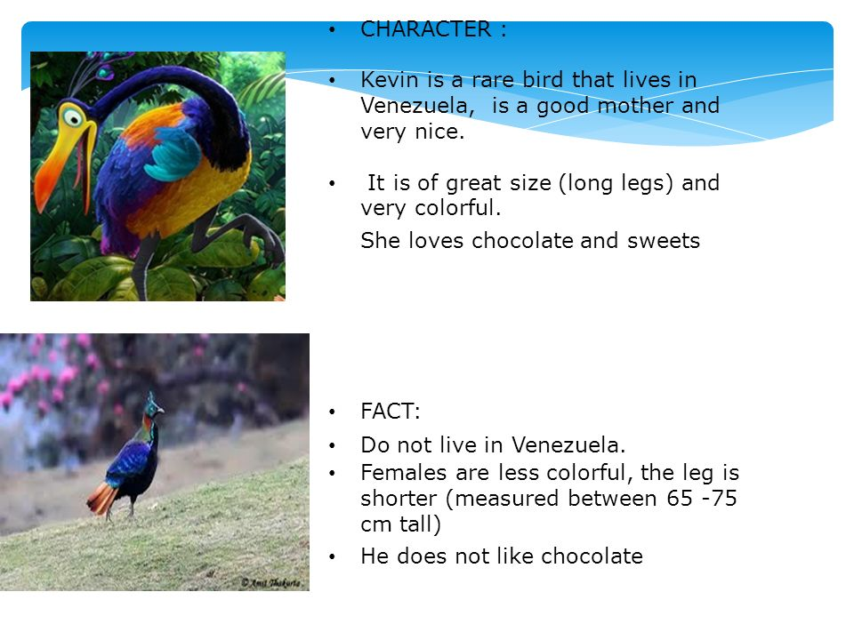 CHARACTER :Kevin is a rare bird that lives in Venezuela, is a good mother and very nice.