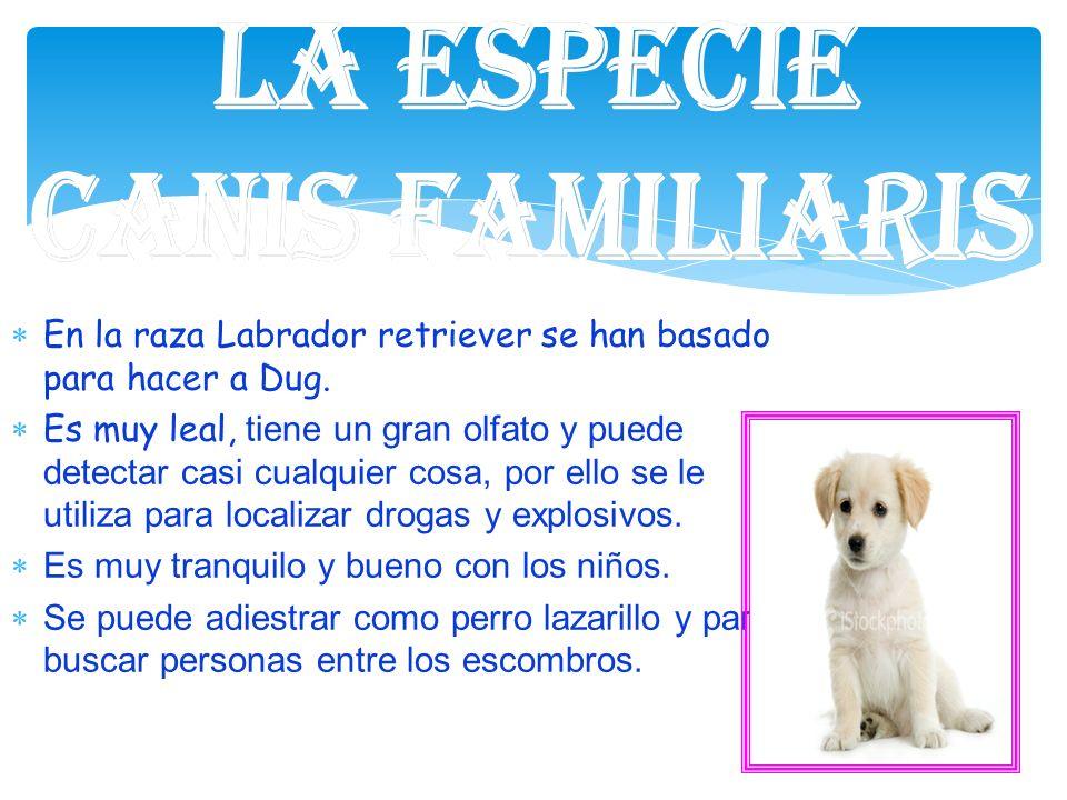 La especie Canis familiaris. En la raza Labrador retriever se han basado para hacer a Dug.