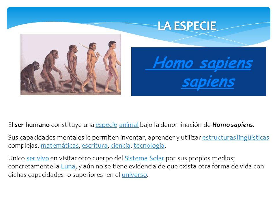 Homo sapiens sapiens LA ESPECIE