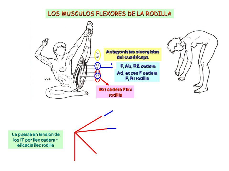 Mialgiya de los músculos de la rodilla - El frio y su incidencia en ...