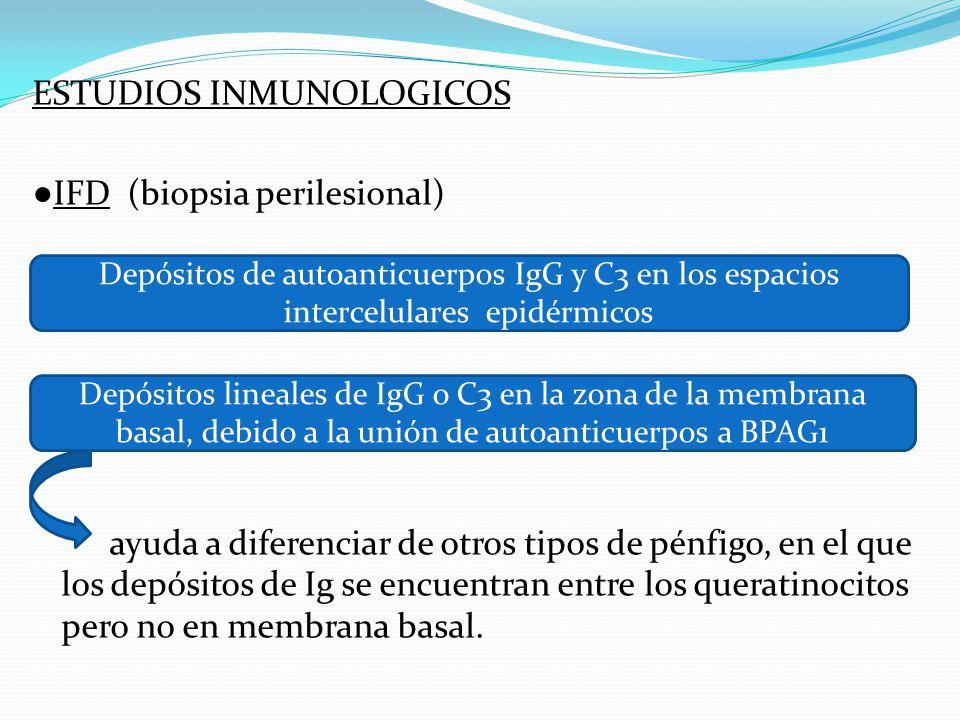 ESTUDIOS INMUNOLOGICOS ●IFD (biopsia perilesional) ayuda a diferenciar de otros tipos de pénfigo, en el que los depósitos de Ig se encuentran entre los queratinocitos pero no en membrana basal.