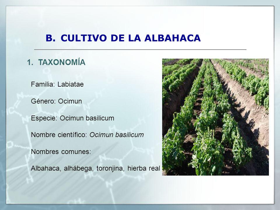 Prueba de adaptaci n y rendimiento de cuatro variedades for Cultivo de albahaca en interior