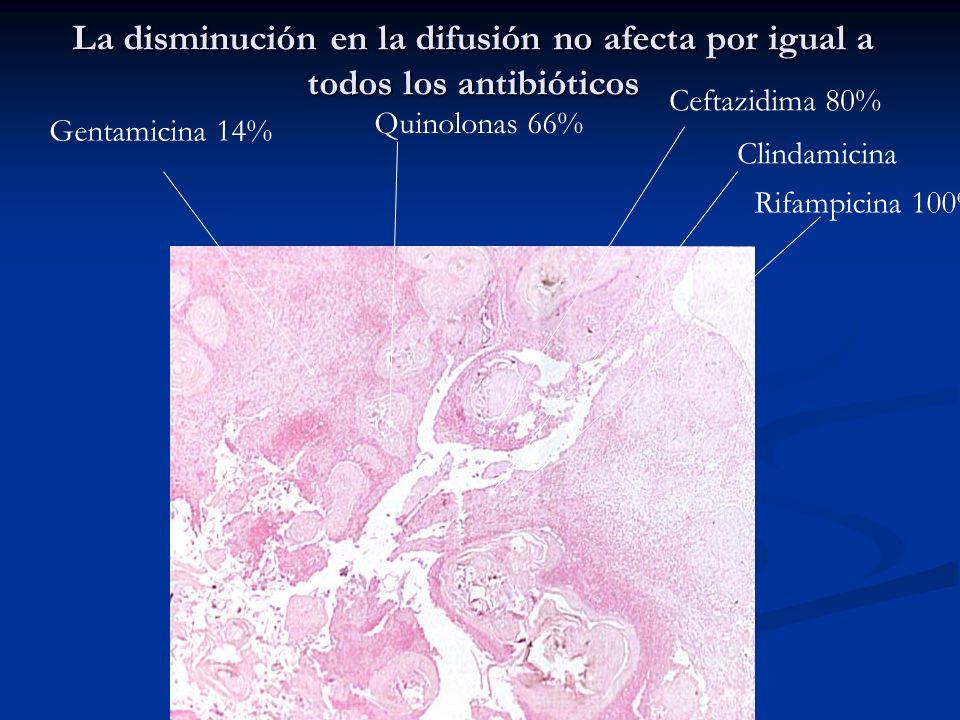 La disminución en la difusión no afecta por igual a todos los antibióticos