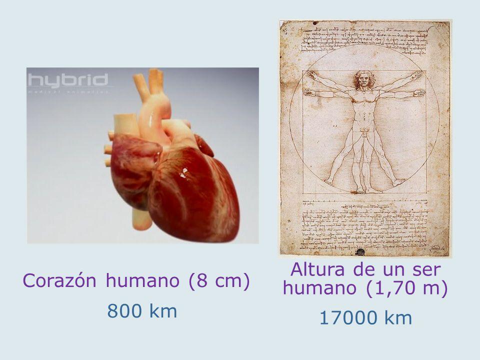 Altura de un ser humano (1,70 m)