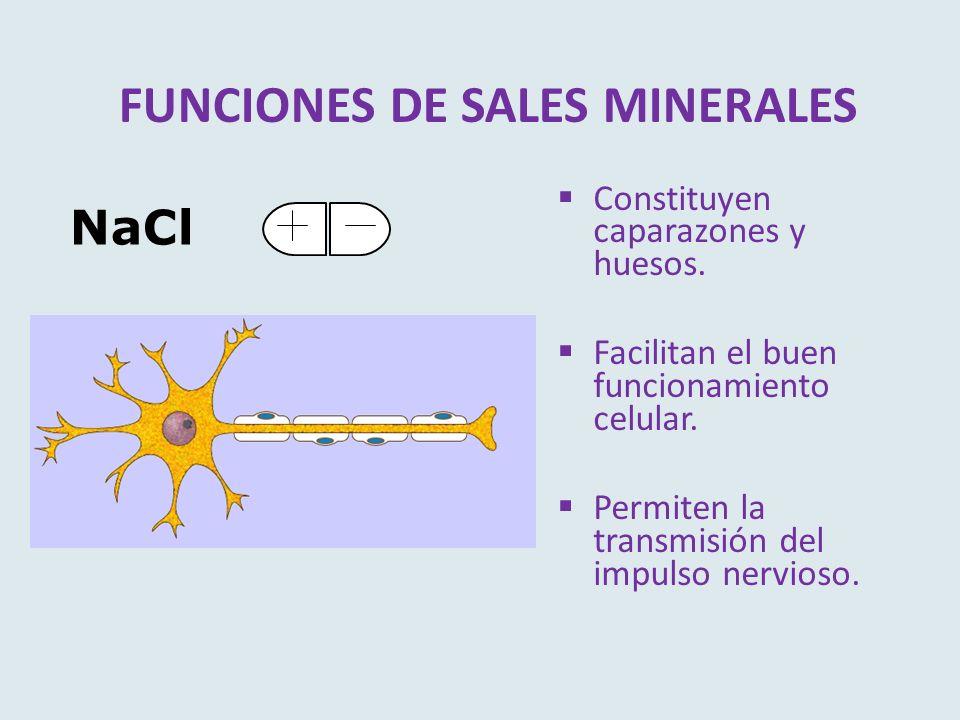 FUNCIONES DE SALES MINERALES