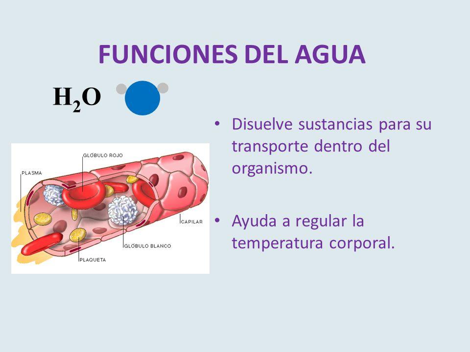 FUNCIONES DEL AGUA H2O. Disuelve sustancias para su transporte dentro del organismo.