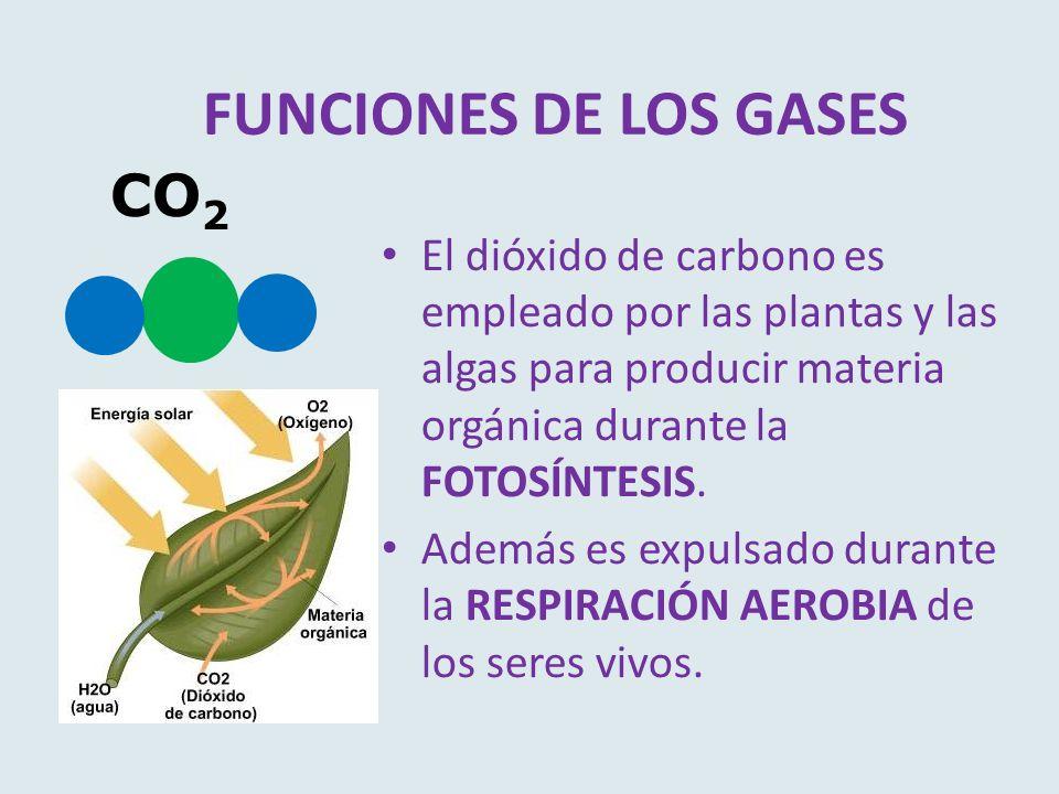 FUNCIONES DE LOS GASES CO2