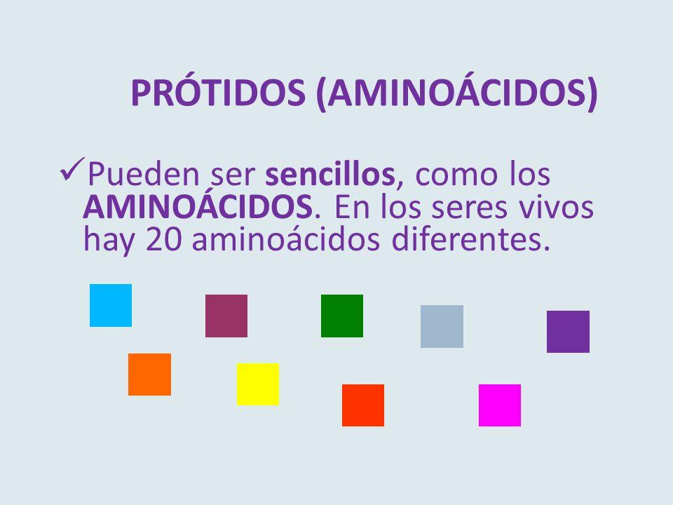 PRÓTIDOS (AMINOÁCIDOS)