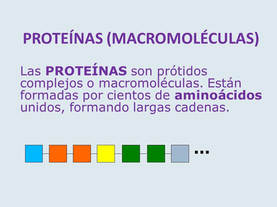 PROTEÍNAS (MACROMOLÉCULAS)