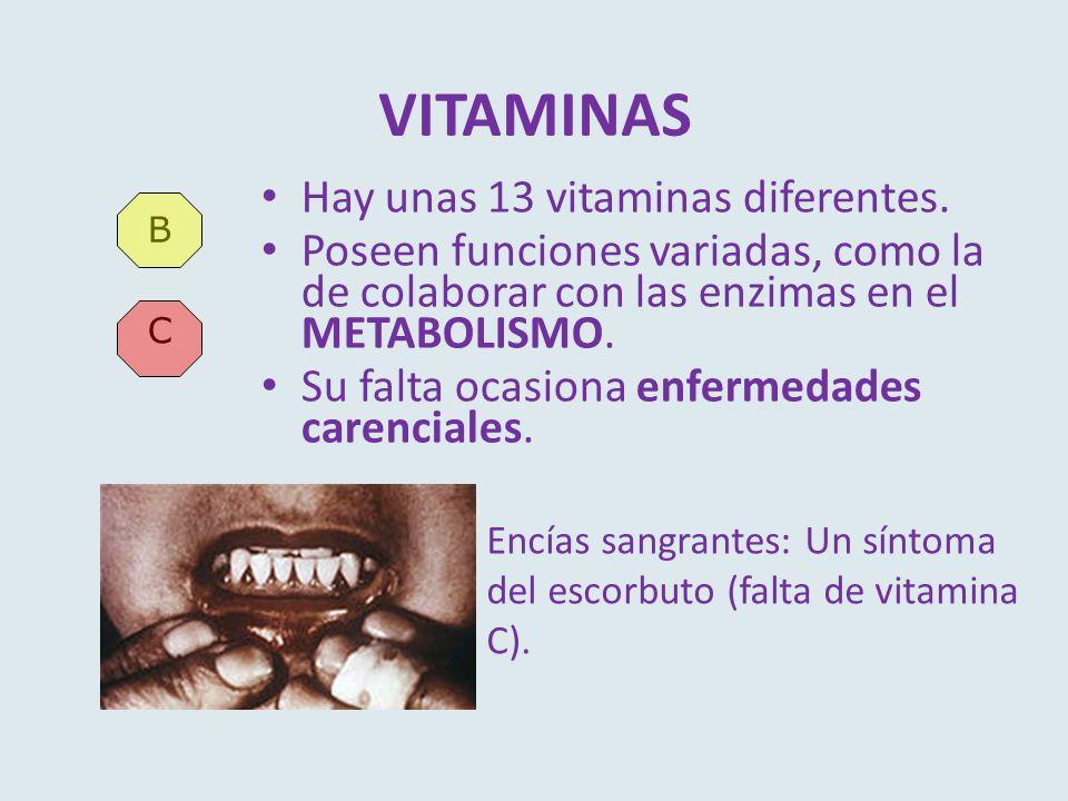 VITAMINAS Hay unas 13 vitaminas diferentes.