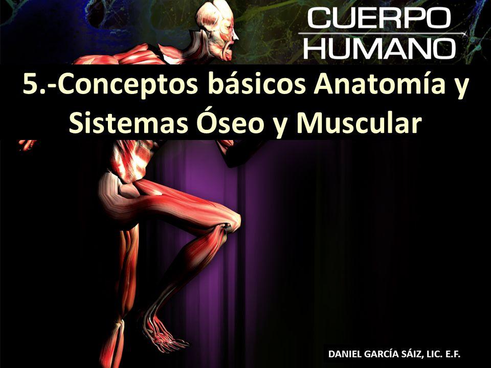 5.-Conceptos básicos Anatomía y Sistemas Óseo y Muscular