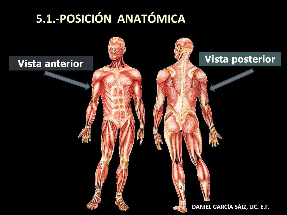 5.1.-POSICIÓN ANATÓMICA Vista posterior Vista anterior