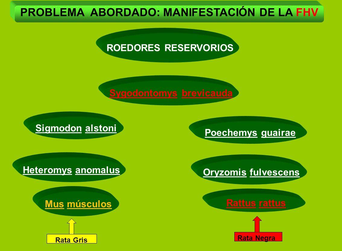 PROBLEMA ABORDADO: MANIFESTACIÓN DE LA FHV Sygodontomys brevicauda