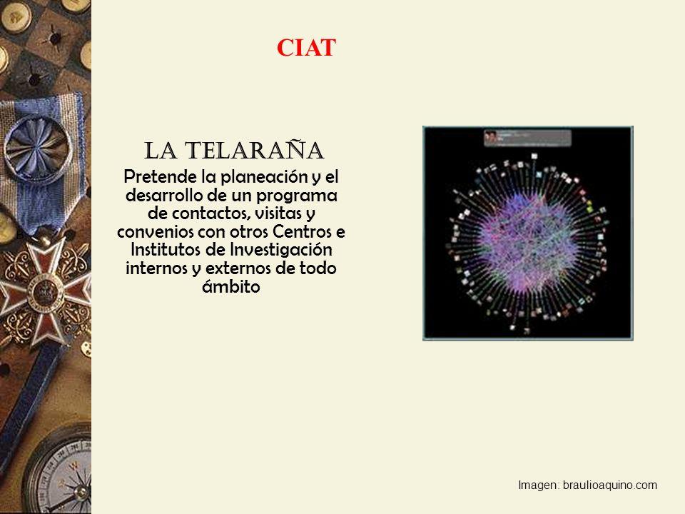 CIAT La Telaraña.